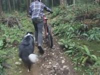 mtber vs dog