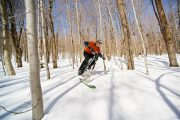 fat bike skis thumb