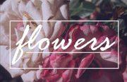 Flowers Sthen